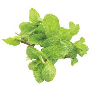 Fresh Mint Bunches-20x150g